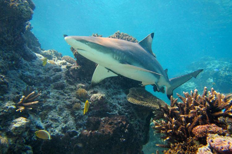 Sharks: Still Misunderstood | X-Ray Mag