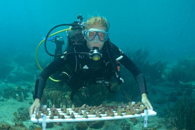 SECORE diver with a tray of Seeding Units that will be outplanted onto a reef in the waters of Curacao.