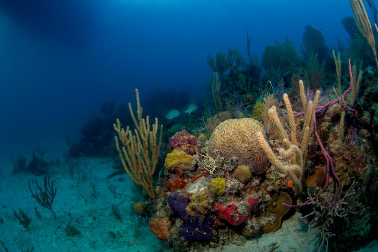 (file photo) Shallow reef off Grand Bahama