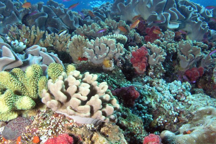 Coral reef in Hawaiian waters.