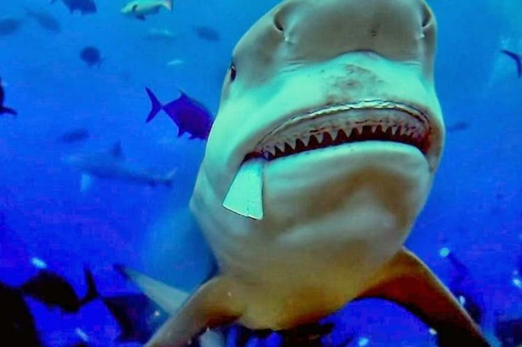 Of Shark And Man, David Diley, Rosemary E Lunn, Roz Lunn, X-Ray Mag, XRay Magazine, scuba diving with Bull Sharks, Nice Film Festival Award Winner