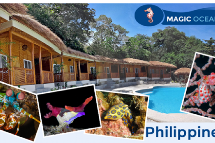 Magic oceans dive resort opens for business x ray mag - Magic oceans dive resort ...