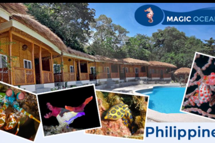 Magic oceans dive resort opens for business x ray international dive magazine - Magic oceans dive resort ...