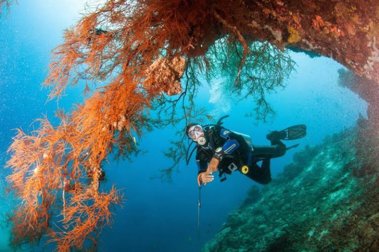 Diver And C Overhang Cebu Photo By Andrey Bizyukin