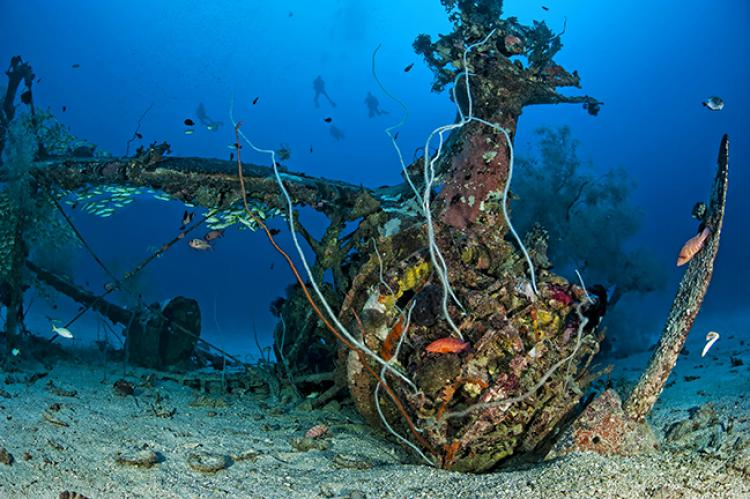 aircraft wrecks of papua new guinea x ray mag
