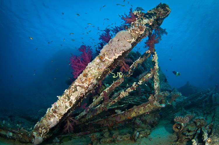 Hurghada: Red Sea Wrecks   X-Ray Mag