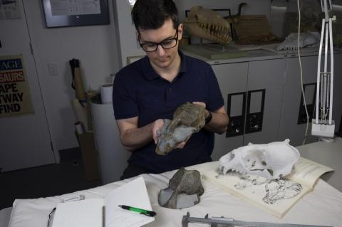 Palaeontologist and PhD student James Rule inspects the fossil skull of the newly identified monk seal species.