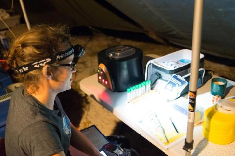 Scientist Camryn Allen processes samples from green sea turtles in a field laboratory in the northern Great Barrier Reef.