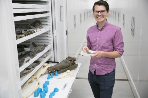 Lead author Keegan Melstrom, with 3D prints of extinct crocodyliform teeth (blue), a skull of an extinct crocodyliform, and skulls of living representatives of this group.