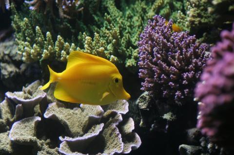 Fish at coral reef.
