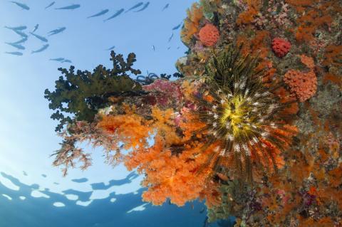 (File photo) Wakatobi house reef