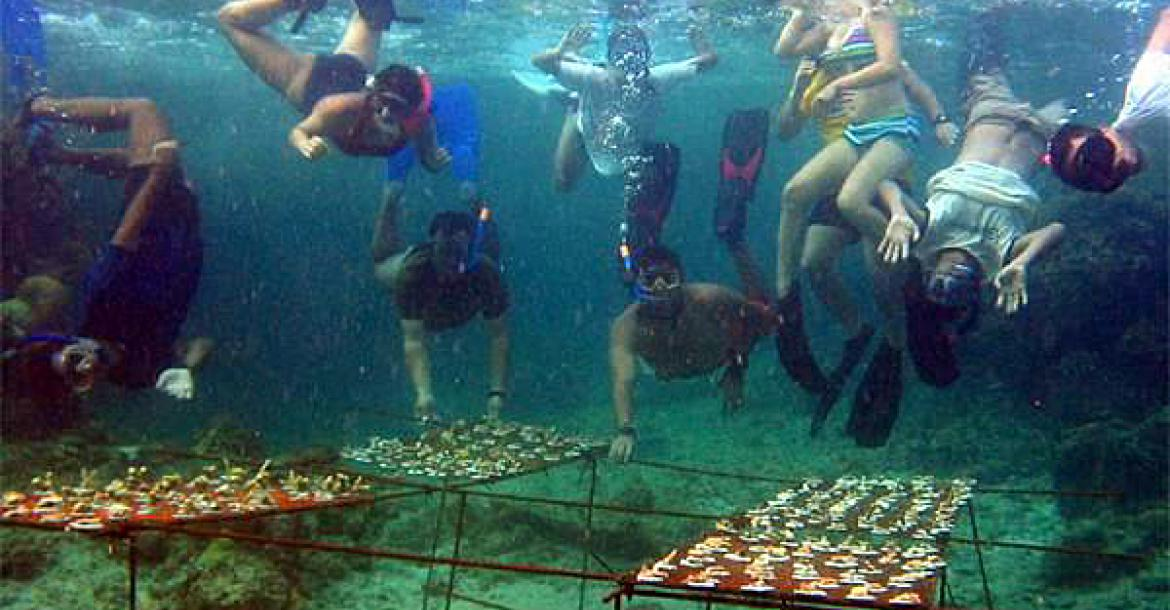 Coral Gardening A New Profession For Resorts X Ray Mag