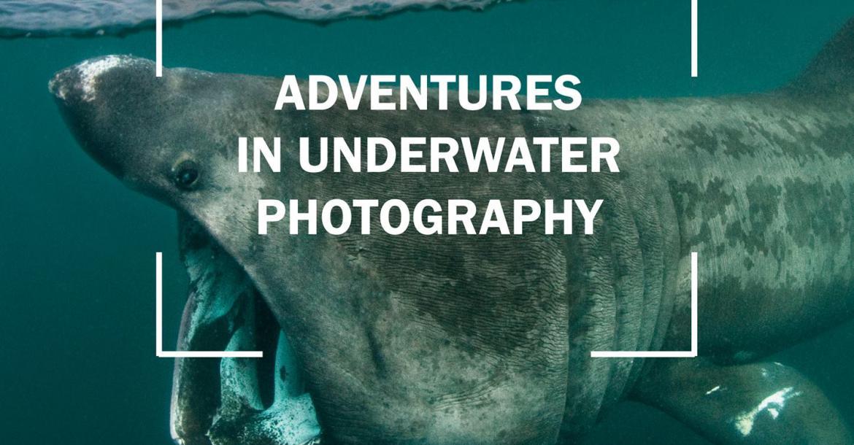 National Marine Aquarium, Alex Mustard, underwater photos, XRay Mag, Roz Lunn, underwater images, Plymouth