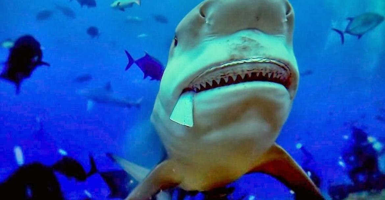 Of Shark And Man, David Diley, Rosemary E Lunn, Roz Lunn, X-Ray Mag, XRay Magazine, scuba diving with Bull Sharks, Nice Film Festival Award Winner