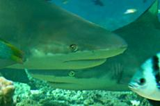 sew study; shark fishing not sustainable