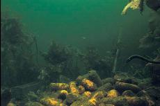 Dumped munitions lying on the seafloor