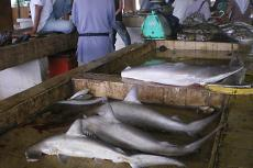 Sharks sold at the Semporna fish market in Malaysia