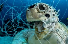 Shane Gross, Ocean Art Underwater Photography Contents, Conservation, Ghost Fishing, Turtle, Rosemary E Lunn, Roz Lunn, X-Ray Mag, XRay Magazine, scuba diving news, underwater photography news