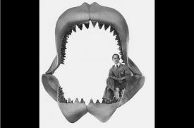Reconstruction of the jaws of the <i>Carcharodon megalodon</i>.