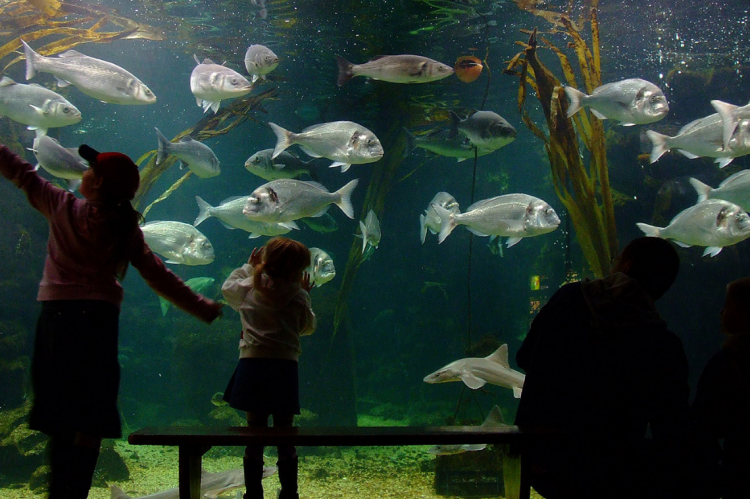 Frankie Hobro, Anglesey Sea Zoo, aquarium, North Wales, Anglesey, Lobster Hatchery, Rosemary E Lunn, Roz Lunn, X-Ray Mag, X-Ray Magazine, scuba diving news, COVID-19, coronavirus