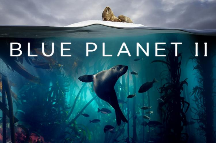 Blue Planet II, X-Ray Mag, XRay Magazine, Rosemary E Lunn, National Television Impact Award, plastic oceans, plastic pollution