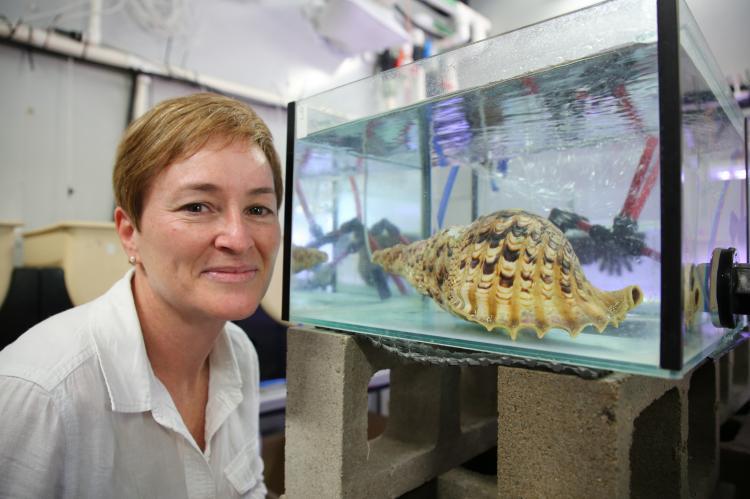 AIMS' Dr Cherie Motti, beside a tank housing a Pacific triton sea snail.