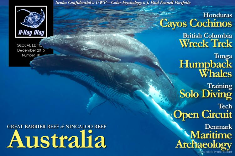 Humpback whales off Tonga. Covers hot by Don Silcock