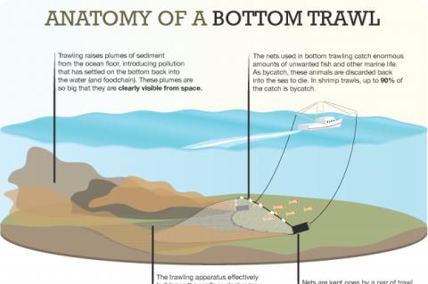 Anatomy of a bottom trawl.