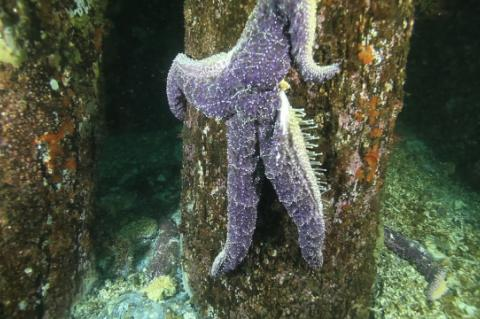 Sick Starfish Syndrome, Laura James, The Seattle Times, Rosemary E Lunn, X-Ray Mag