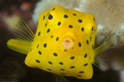 Take Your Photography Underwater on Zoom