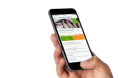 Good Fish Guide App, XRay Mag, Rosemary E Lunn, Roz Lunn, Sustainable eating, ocean fish