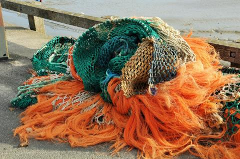 Fishing pressure has reduced the porportion of old fish in the ocean.